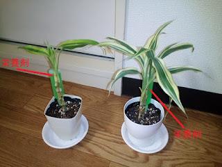 観葉植物の写真2