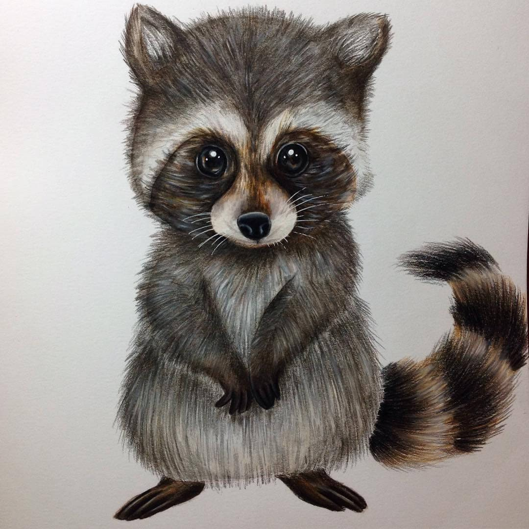 12-Raccoon-Estefani-Barbosa-Fantasy-Animals-in-Pencil-Drawings-www-designstack-co