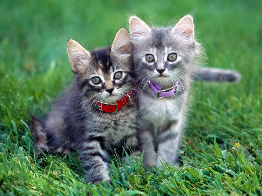 funny animals wallpapers cats - photo #22