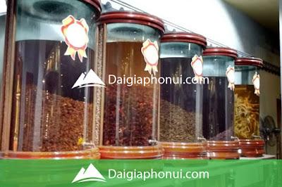 Bình ngâm rượu to nhất - lớn nhất hiện nay trên thị trường - Dai Gia Pho Nui - Daigiaphonui.com