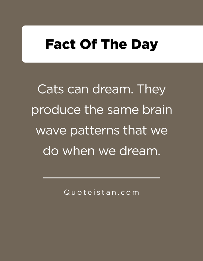 Cats can dream. They produce the same brain wave patterns that we do when we dream.