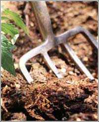 garden fork and mulch