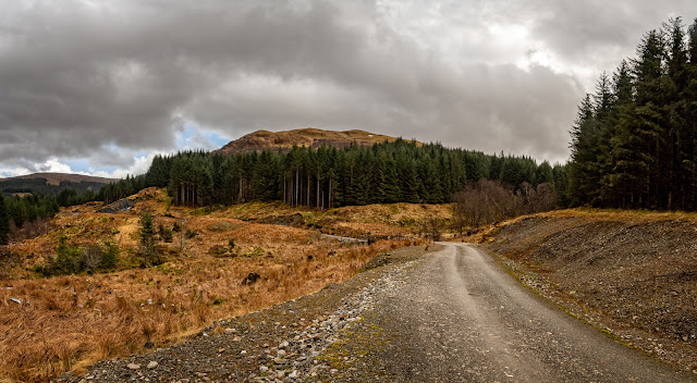 Photo of the forestry track leading to the hill we climbed in Argyll