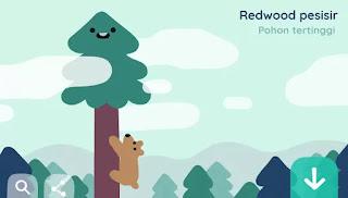 Redwood pesisi, google doodle