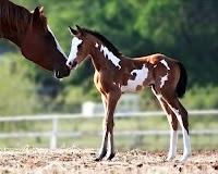 Sevimli bir yavru tay ve anne at