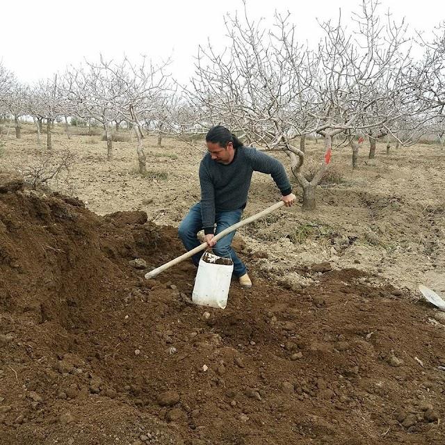 Yazar, Fıstık üzerinden Fakıbaba'ya yüklendi