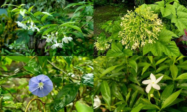 Bunga Indah Mekar Berkembang
