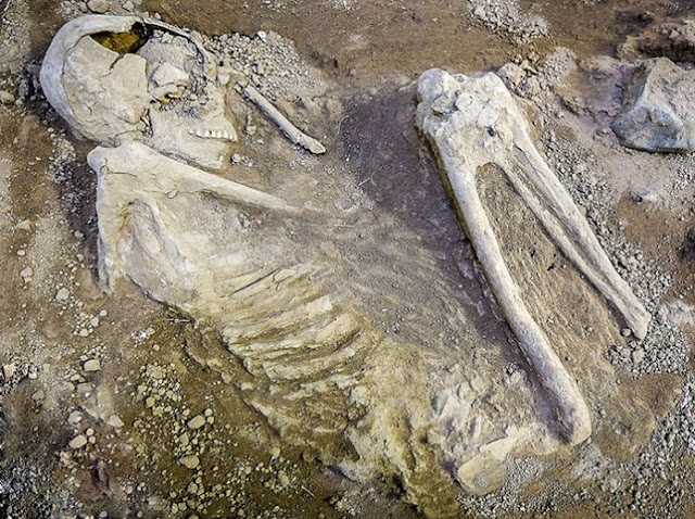 7,500 year old burial found in Iran