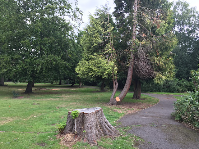 Horse-chestnut stump in The Knoll, Hayes.  25 July 2017.