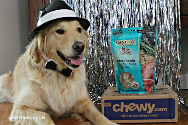 canidae holistic dog treats review