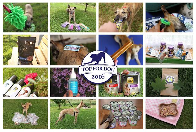 TOP for DOG 2016 - podsumowanie