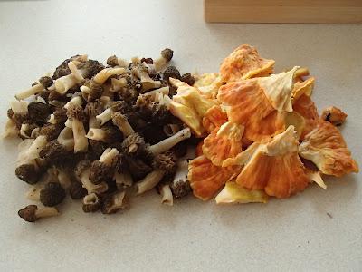 grzyby 2017, grzyby wiosenne, grzyby w maju, Mitrophora semilibera mitrówka półwolna, Laetiporus sulphureus żółciak siarkowy