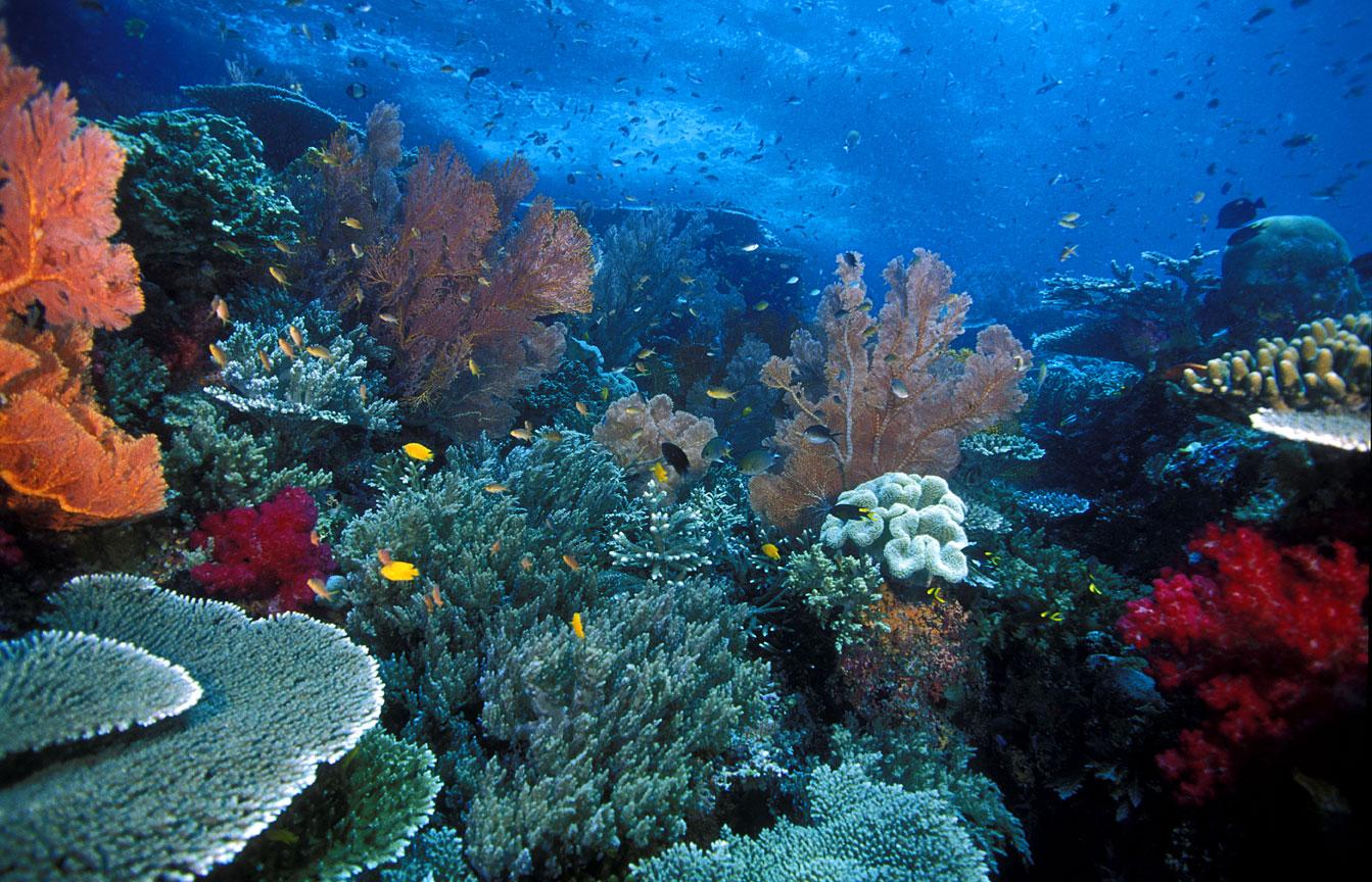 Fakta Unik Kepulauan Raja Ampat