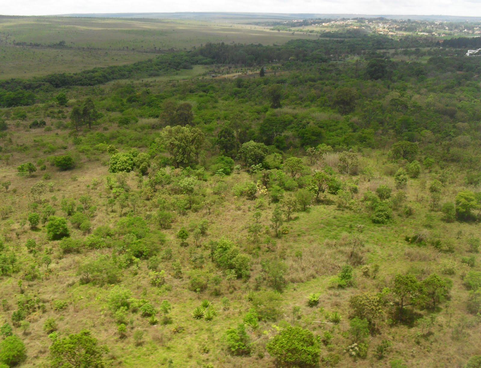 #Cerrado, Características do Cerrado Brasileiro