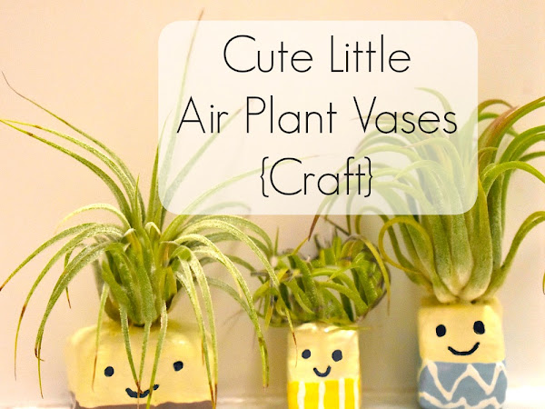 Cute Little Air Plant Vases {Craft}