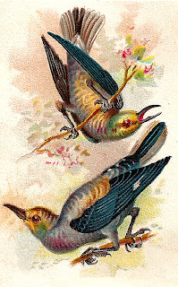 bird antique artwork trade card illustration digital image