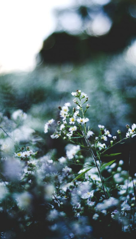 Spring Wallpaper White Flowers Image Wallpapers Clone