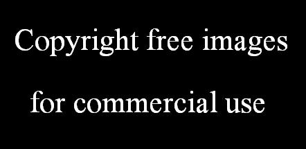 अपने पोस्ट के लिए नॉन कॉपीराइट इमेज डाउनलोड करें - Copyright free images for commercial use