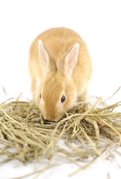 Kelinci lucu manis dan sangat manis suka banget pergi pakan ternak kelinci dna lucu super manis