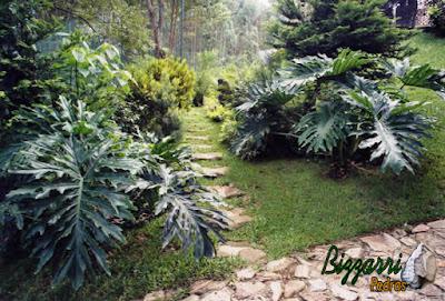 Pisadeira de pedra no jardim, com pedra moledo tipo pedra natural, com execução do paisagismo natural em jardim de residência em condomínio em Mairiporã-SP.