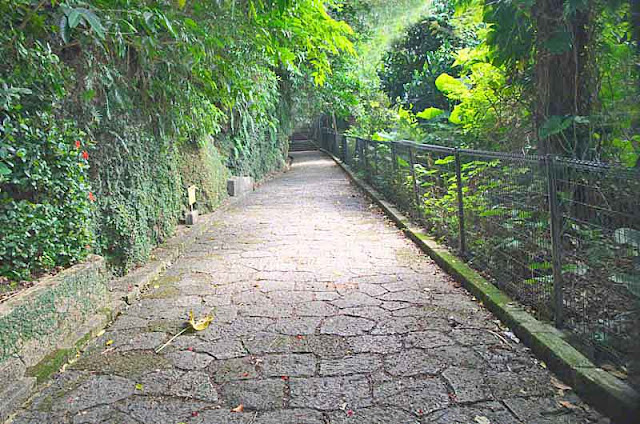 Cobblestone walkway surrounded by vegetation