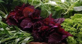 7 Jenis Sayuran Penambah Darah untuk Tubuh