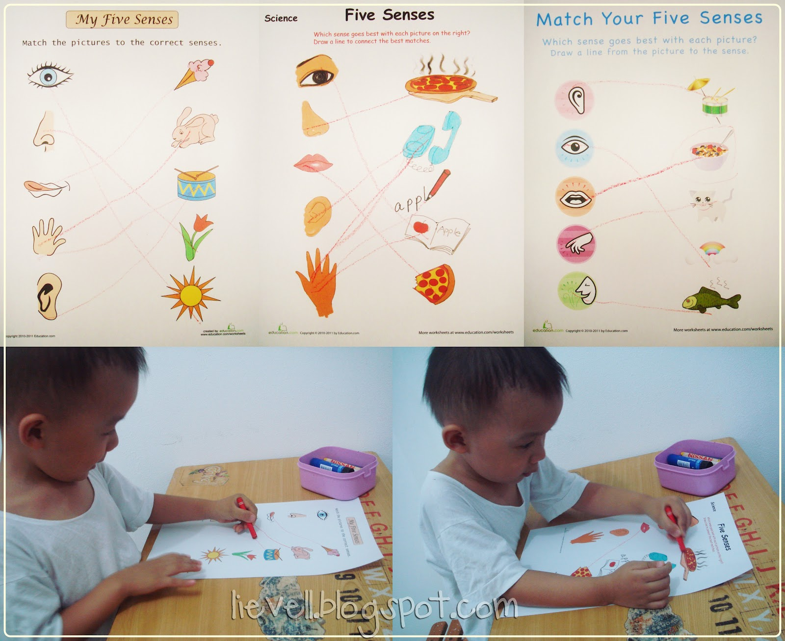 Preschool Doc Mcstuffin Amp Human Body
