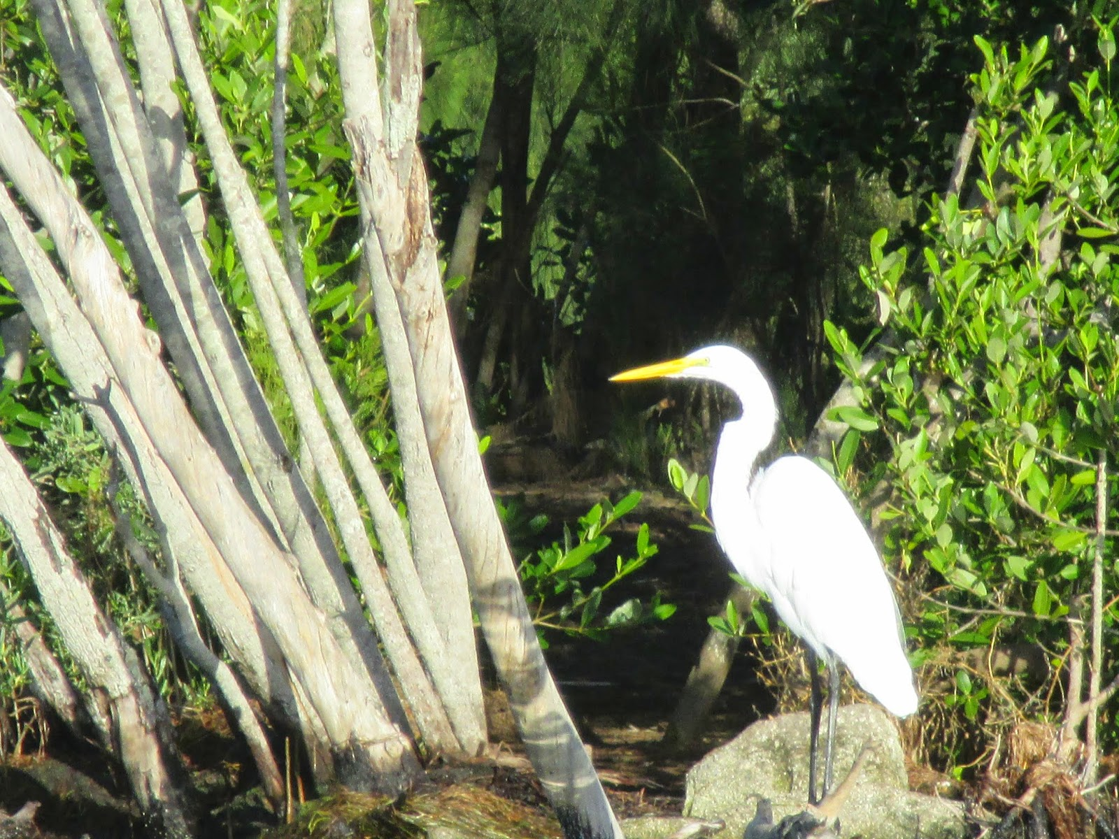 Dave's Yak Tales: Haulover Canal And Blackpoint Wildlife