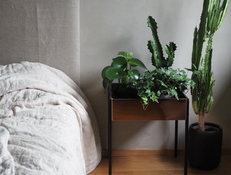 viherkasvit makuuhuoneessa
