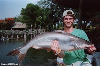 Essen Untuk Ikan Patin Indukan