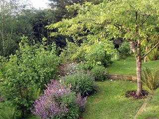 rincón del jardín con ciruelo