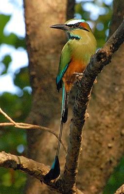 El Salvador National Animal : salvador, national, animal, Salvador, Perspectives