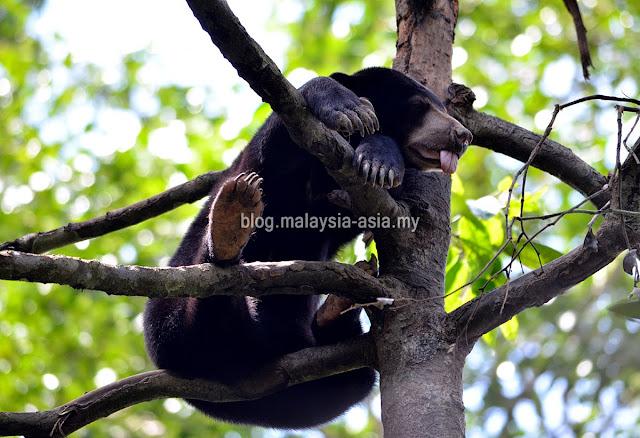 Bornean Sun Bear Conservation Centre Sabah