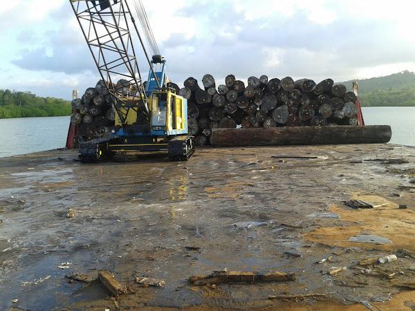 トーレム原木の船積みの様子