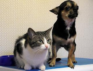 Kwasy Omega 3 i Omega 6 w diecie psów i kotów