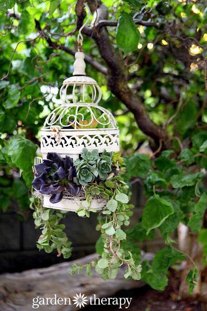 Succulent Birdcage Planter