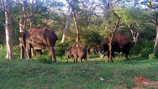 Kalakadu Tiger Reserve