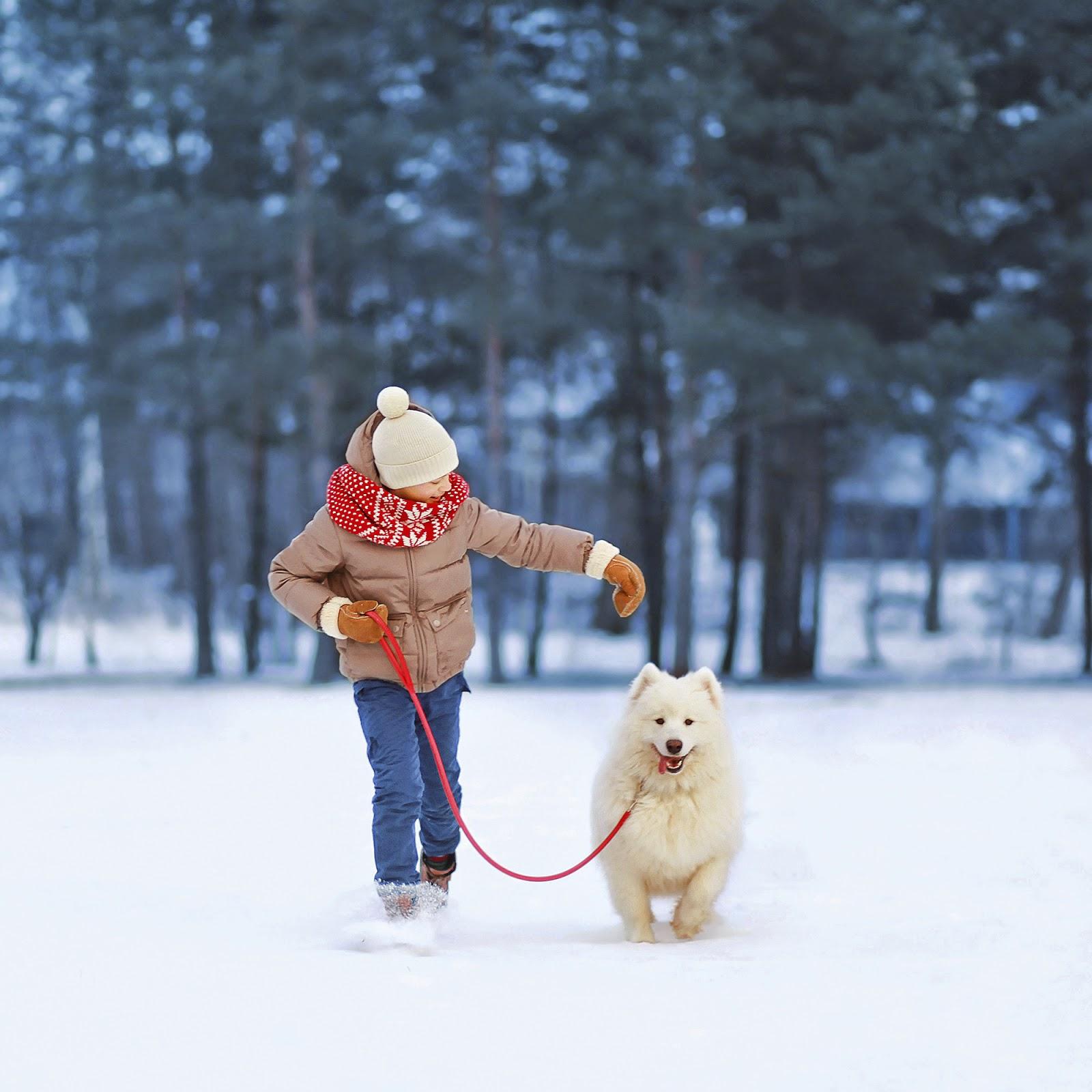 Bregman Veterinary Group: Winter Walking Tips For National