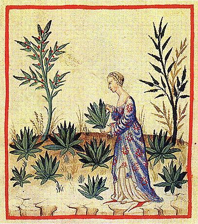 medieval manuscripts unlocked blogger