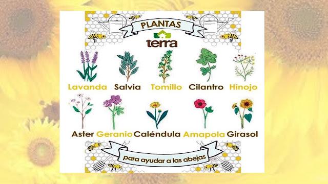 plantas atraer abejas
