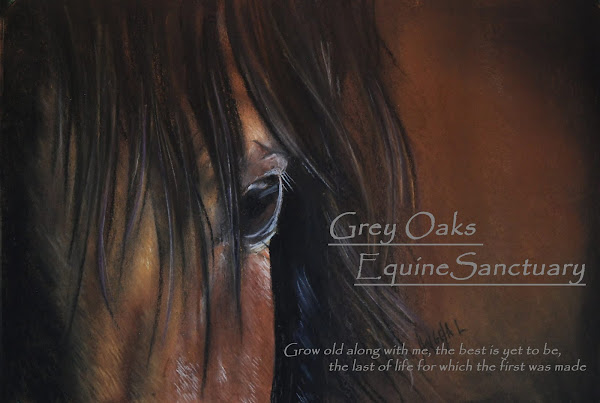 Grey Oaks Equine Sanctuary