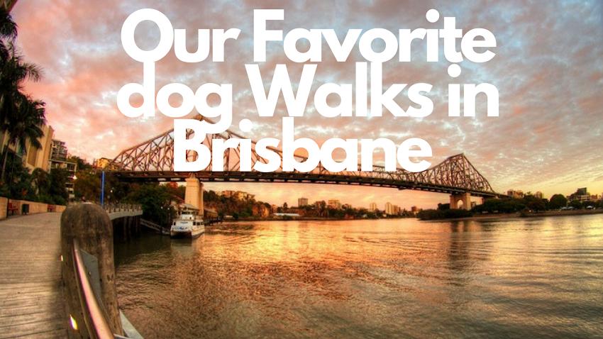 OUR FAVORITE DOG WALKS IN BRISBANE, QUEENSLAND. AUSTRALIA