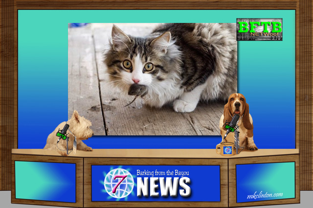 BFTB NETWoof News reports on cats working to rid areas of rats