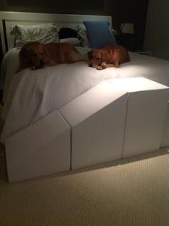 escadas cães grandes