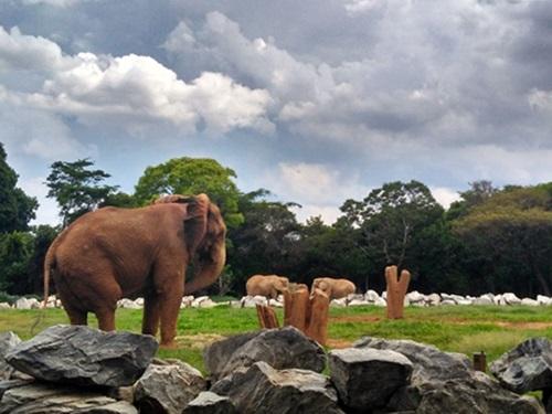 Belo Horizonte - Parque de diversões e Zoológico