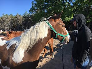 El Bronco, Riitta Reissaa, Unkari, Horsexplore