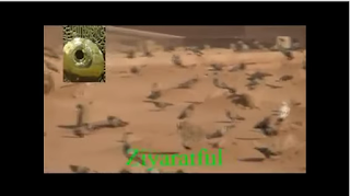 https://www.youtube.com/watch?v=ZKi8PpexsLA