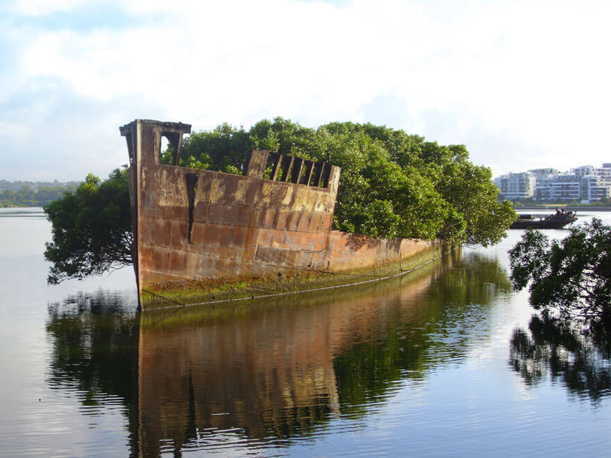 The Floating Forrest in Homebush Bay