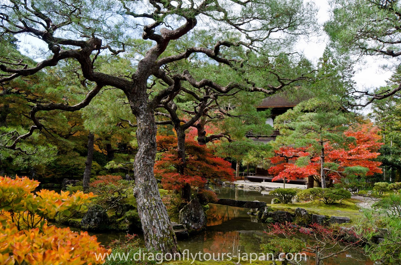 The Silver Pavilion in Fall - Kyoto | Dragonfly Tours Japan - Small ...