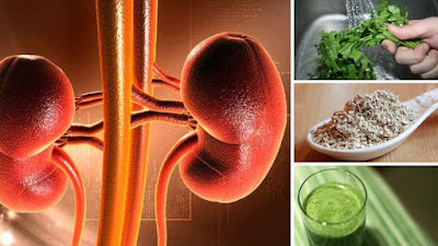 10 HERBS FOR A TOTAL KIDNEY CLEANSING